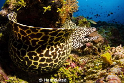 Murray the Moray. 